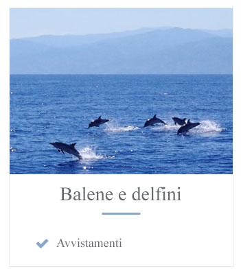 Immagini balene e delfini